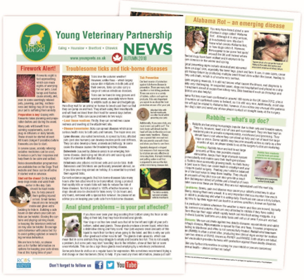 Alabama Rot – an emerging disease  – Welcome to Young